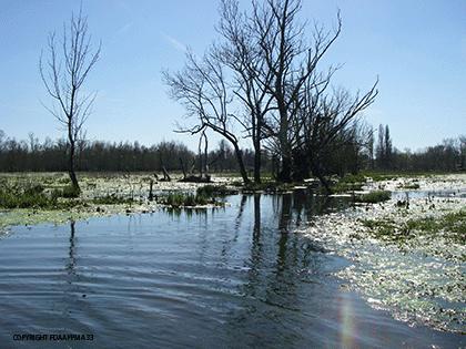 légende-marais-inondé