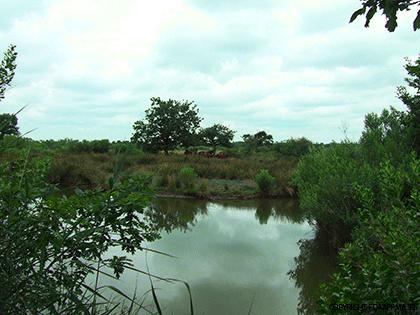 prairie-humide