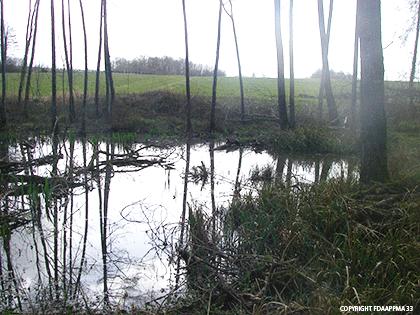 légénde-forêt-alluviale-(5)