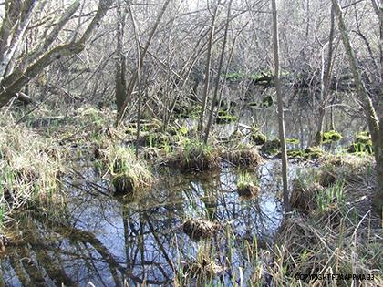 legende-forêt-alluviale
