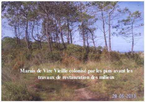 marais de Vire Vielle